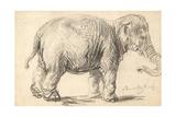 An Elephant, 1637 Giclée-tryk af  Rembrandt Harmensz. van Rijn
