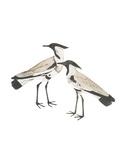 Spur-Winged Plover Impressão giclée por Maria Mendez