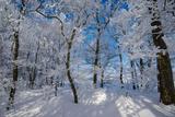 Iced Up Trees in the Winter Wood, Triebtal, Vogtland, Saxony, Germany Fotografisk trykk av Falk Hermann