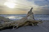 Evening on the Western Beach of Darss Peninsula Photographic Print by Uwe Steffens