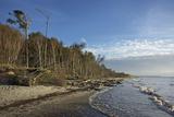 Birches on the Western Beach of Darss Peninsula Photographic Print by Uwe Steffens