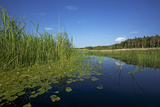 Therbrenner See Lake with Rushes and Reet, a Beach Lake on the Western Beach of Darss Peninsul Photographic Print by Uwe Steffens