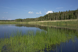 Therbrenner See Lake with Rushes and Reet, a Beach Lake on the Western Beach of Darss Peninsula Photographic Print by Uwe Steffens