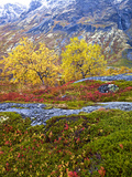 Norway, Boverkinnhalsen, Jotunheimen National Park, Autumn Fjellbirken Against Snowy Mountains Photographic Print by K. Schlierbach