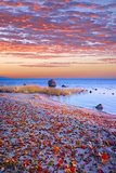 Sweden, Fall by the Hano Bay, Red Autumn Leaves on the Sandy Beach, Red Morning Sky, Baltic Beach Photographic Print by K. Schlierbach