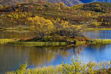 Norway, Boverkinnhalsen, Jotunheimen National Park, Autumn Fjellbirken on Island in Mountain Lake Photographic Print by K. Schlierbach
