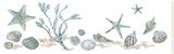 Sea Treasures - Shells Bedruckte aufgespannte Leinwand von Sandra Jacobs