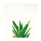 Succulent Simplicity V Neutral Poster van Felicity Bradley