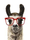 Hip Llama I Premium Giclee Print by Victoria Borges