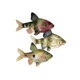 Rainbow Fish II Print by Emma Scarvey
