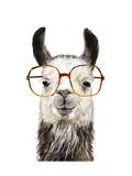 Hip Llama III Giclée-Premiumdruck von Victoria Borges