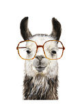 Hip Llama III Premium Giclee Print by Victoria Borges