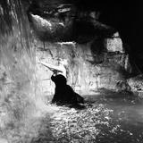 Anita Ekberg, La Dolce Vita, Federico Fellini, 1960 (b/w photo) Foto
