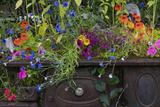 USA, Alaska, Wiseman. Flowers planted in vintage cook stove. Premium fotoprint van Jaynes Gallery