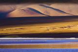 Flamingos, Altiplano, Bolivia Reproduction photographique Premium par Art Wolfe