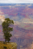 Arizona, Grand Canyon National Park, South Rim Premium Photographic Print by John & Lisa Merrill