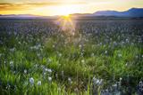 USA, Idaho, Fairfield, Camas Prairie, Sunset in the Camas Prairie Premium fotografisk trykk av Terry Eggers