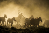 A wrangler herding horses through backlit dust cloud in golden light of sunrise Premium Photographic Print by Sheila Haddad