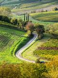 Italy, Tuscany, Chianti, Autumn, Road running through vineyards Fotografie-Druck von Terry Eggers