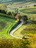 Italy, Tuscany, Chianti, Autumn, Road running through vineyards Photographic Print by Terry Eggers