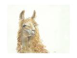 Save the Drama for your Llama Lámina giclée prémium por Patti Mann