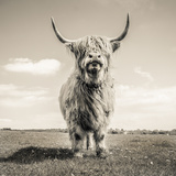 Close up portrait of Scottish Highland cattle on a farm Fotografisk trykk av Mark Gemmell