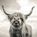 Close up portrait of Scottish Highland cattle on a farm Fotoprint van Mark Gemmell