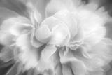 Clear Light Fotoprint van Philippe Sainte-Laudy