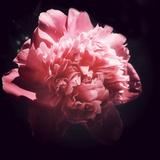 Ephemere Beauty Reproduction photographique par Philippe Sainte-Laudy