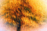 Wild Apple Tree Fotografisk trykk av Ursula Abresch