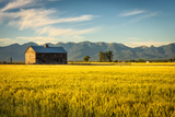 Summer Sunset with an Old Barn and a Rye Field in Rural Montana with Rocky Mountains in the Backgro Valokuvavedos tekijänä Nick Fox