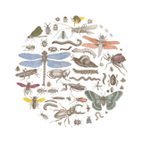 Insect Circle I Bright Posters par  Wild Apple Portfolio