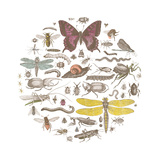 Insect Circle II Bright Affiches par  Wild Apple Portfolio