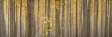 USA, Oregon, Morrow County. Poplar Trees at the Boardman Tree farm. Panorama. Reproduction photographique par Brent Bergherm