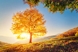 Majestic Alone Beech Tree on a Hill Slope with Sunny Beams at Mountain Valley. Dramatic Colorful Mo Fotografie-Druck von Leonid Tit