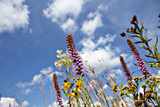 Wild Flowers. Photographic Print by  soupstock
