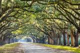 Savannah, Georgia, USA Oak Tree Lined Road at Historic Wormsloe Plantation. Photographic Print by  SeanPavonePhoto