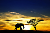 A Lone Elephant Africa Lámina fotográfica por  kesipun