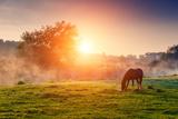 Arabian Horses Grazing on Pasture at Sundown in Orange Sunny Beams. Dramatic Foggy Scene. Carpathia Fotografisk trykk av Leonid Tit