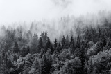 Misty Forests of Evergreen Coniferous Trees in an Ethereal Landscape with Low Laying Mist or Cloud Fotoprint van  PlusONE