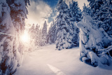 Fantastic Winter Landscape in the Sunny Beams. Dramatic Wintry Scene. Carpathian, Ukraine, Europe. Photographic Print by Leonid Tit