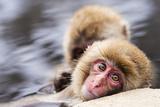 Japanese Snow Monkeys in Nagano, Japan. Photographic Print by  SeanPavonePhoto