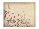 Spring Plum Blossom Blossom on Old Antique Vintage Paper Background Poster von  kenny001