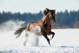 Horse Gallops in Winter Lámina fotográfica por Alexia Khruscheva