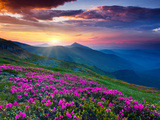 Magic Pink Rhododendron Flowers on Summer Mountain. Dramatic Overcast Sky. Carpathian, Ukraine, Eur Photographic Print by Leonid Tit