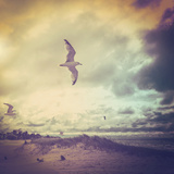 Stormy Day Photographic Print by  soupstock