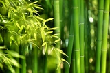 Asian Bamboo Forest with Morning Sunlight Fotografie-Druck von  Sofiaworld