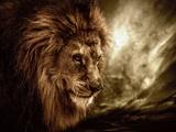Lion Against Stormy Sky Fotografie-Druck von NejroN Photo