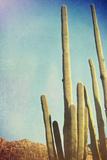 Desert Cactus With An Artistic Texture Overlay Julisteet tekijänä  pdb1