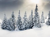 Trees Covered with Hoarfrost and Snow in Mountains Fotografie-Druck von Leonid Tit